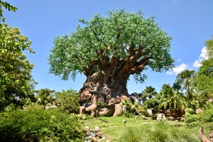 Tree of Life...All of us TOGETHER live as the Tree of Life.