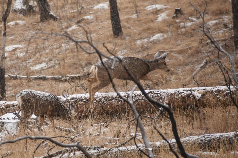 Staunton State Park 2018-2-19-9