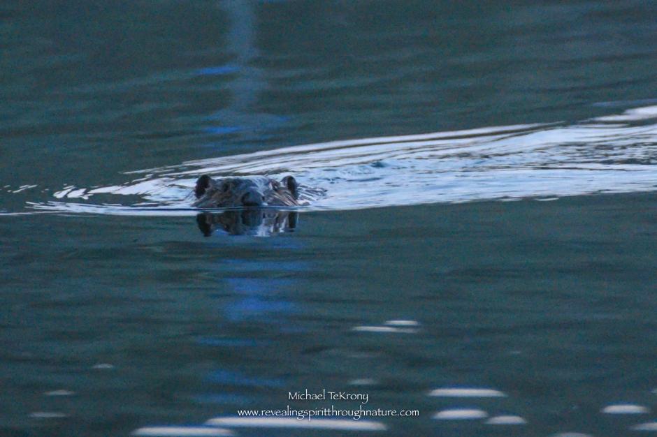 Bear Creek Lake 2018-4-30-4