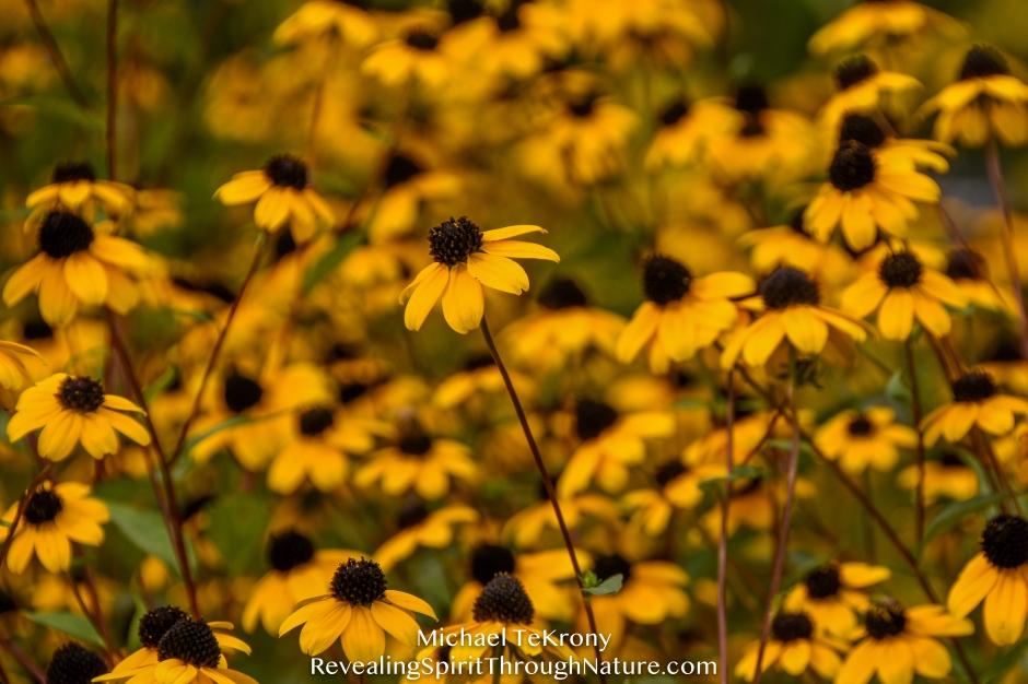 Botanical Garden Denver 2018-9-3-3