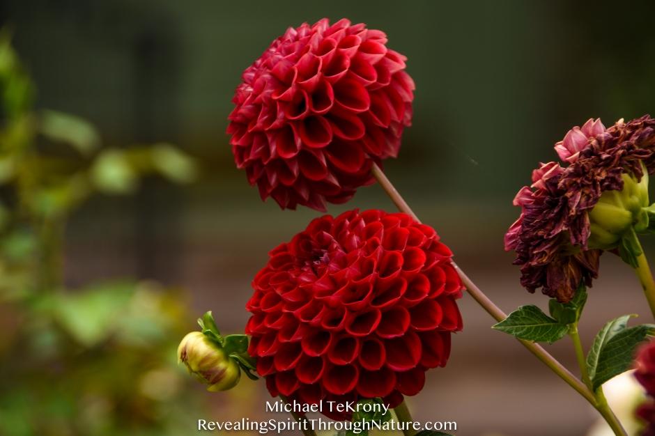 Botanical Garden Denver 2018-9-3-9