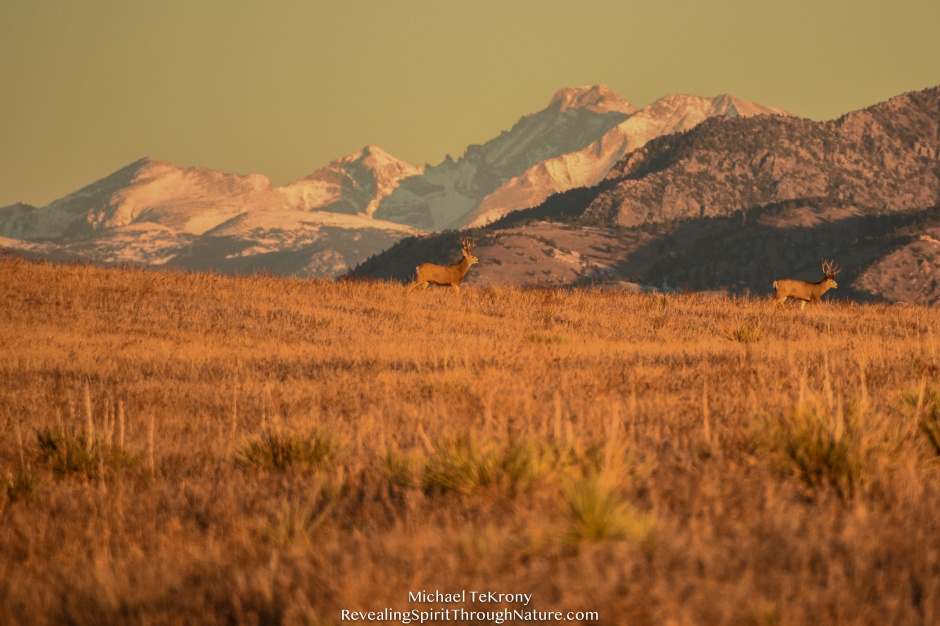 Green Mountain Trail 2018-11-20-10
